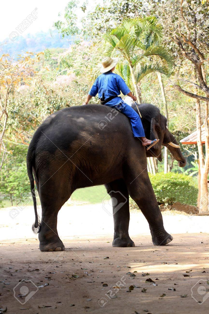 Mahout and elephan at Lampang province 02 Stock Photo - 8909672