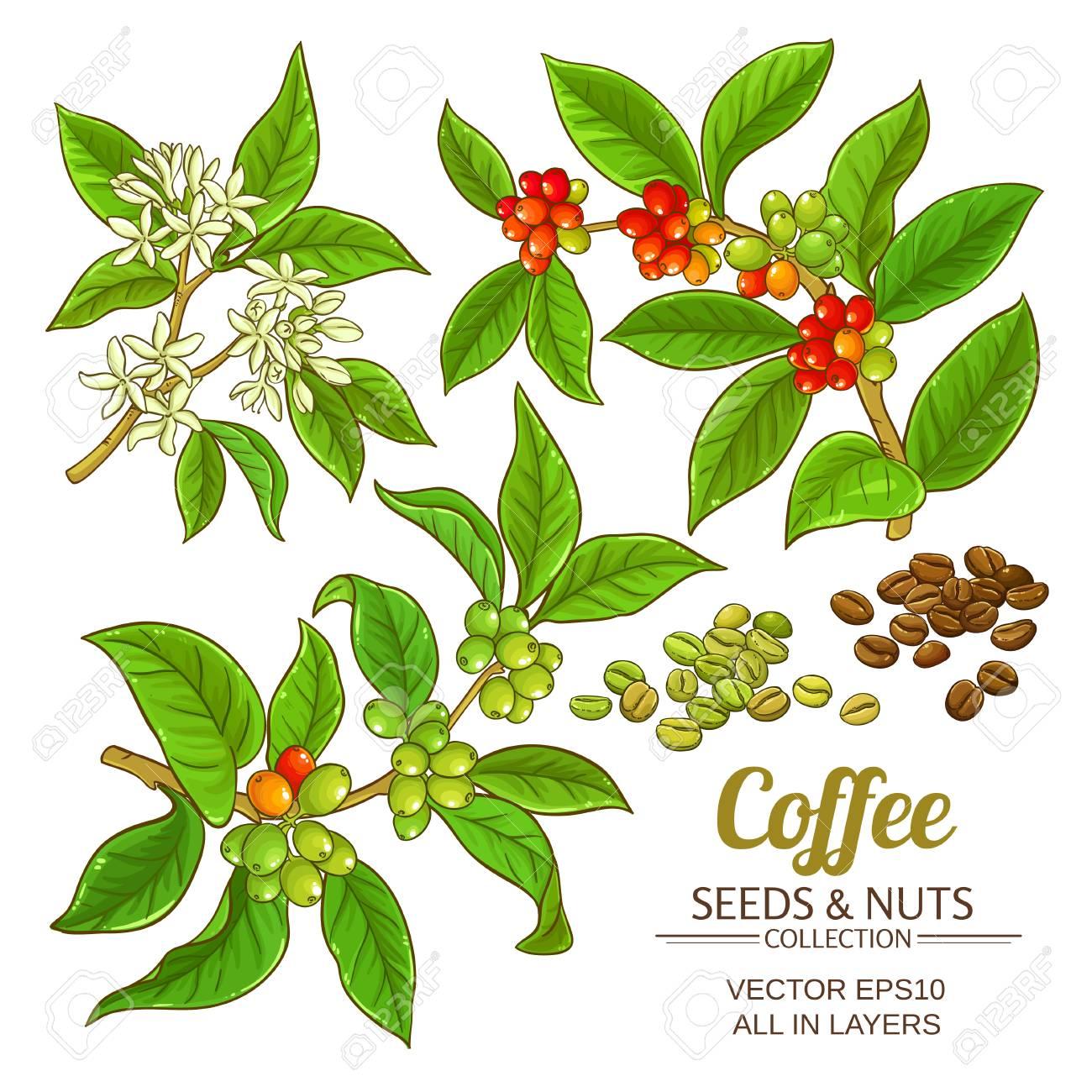 Coffee vector set icon. - 99464707