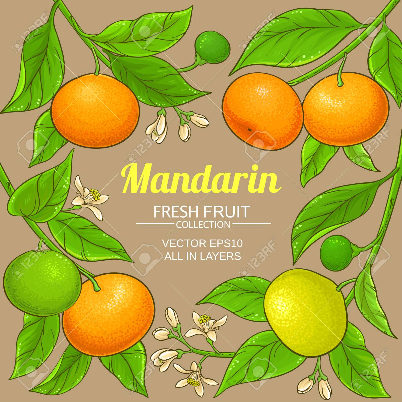 mandarin vector frame - 108435441