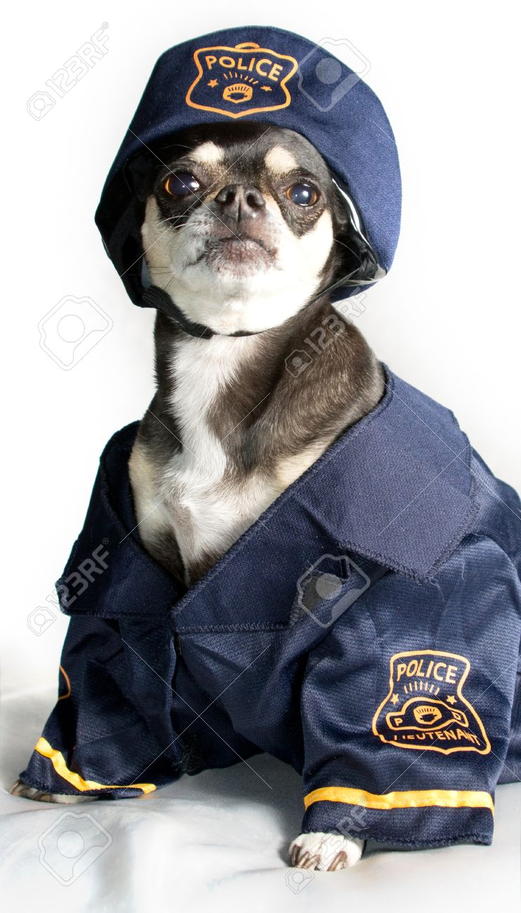 [Image: 13168120-Chihuahua-Dressed-as-Police-Off...to-dog.jpg]
