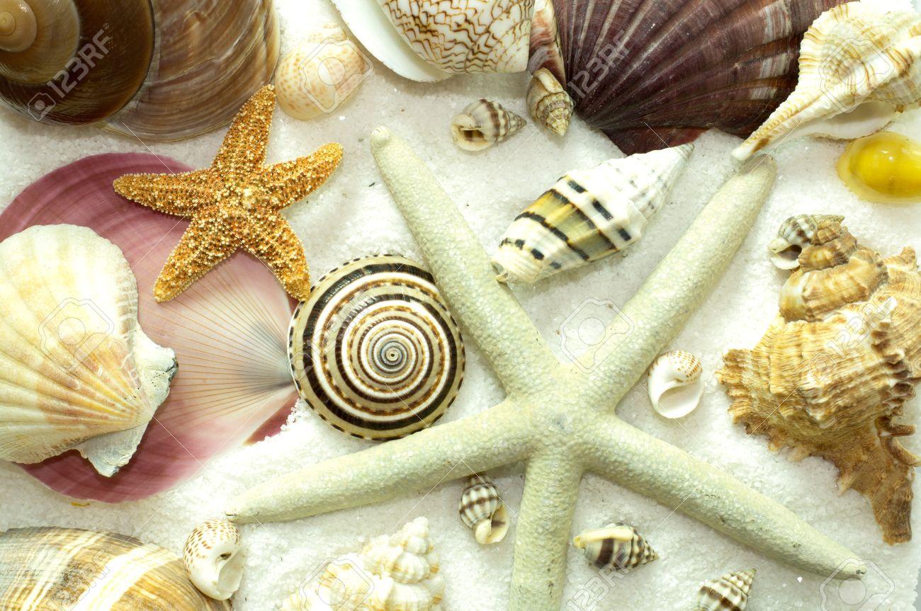Patron De Fondo Sin Fisuras De Conchas De Mar Estrellas De Mar - Fotos-de-conchas-de-mar