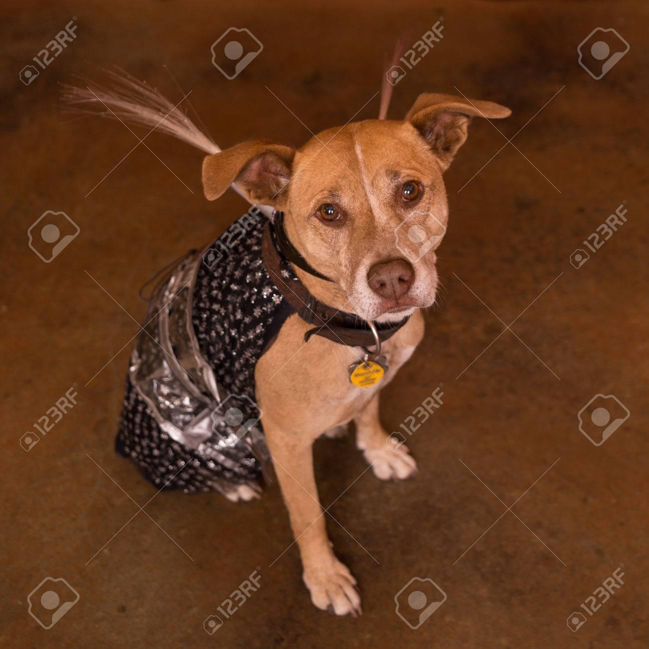 Lustiger Hund In Fremden Kostum Fur Halloween Lizenzfreie Fotos