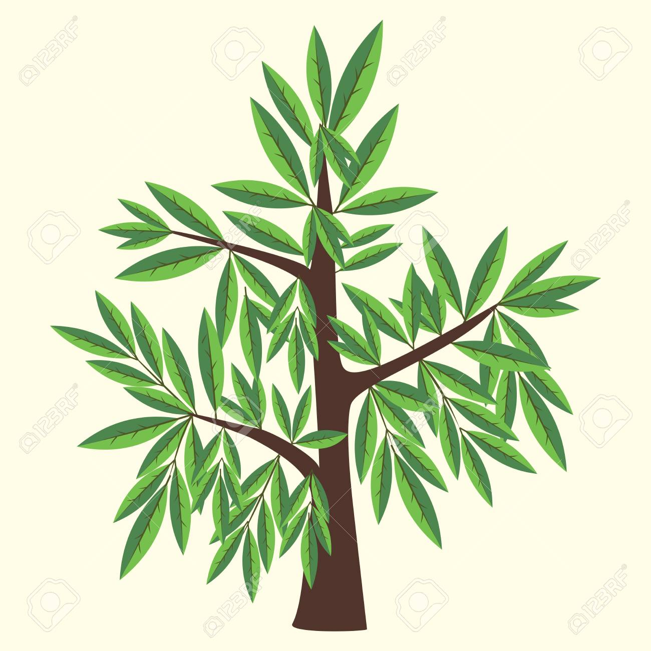 Vector Illustration Of Willow Tree With Two Color Leaves On Light ...