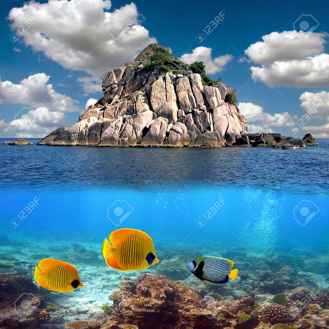 Tropical paradise and corals on a reef top, Koh Tao island, Thailand Stock Photo - 9488773