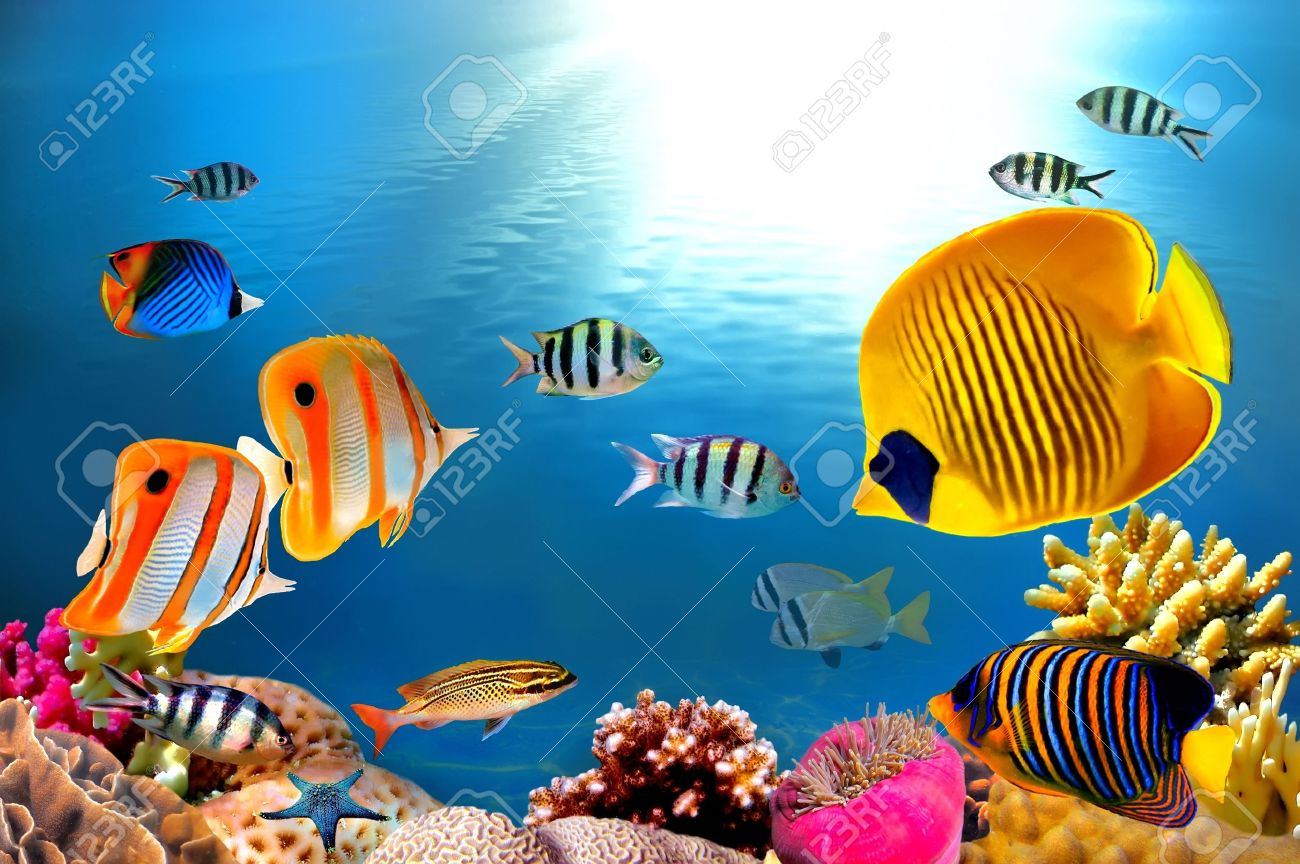 Photo of a coral colony - 9488631