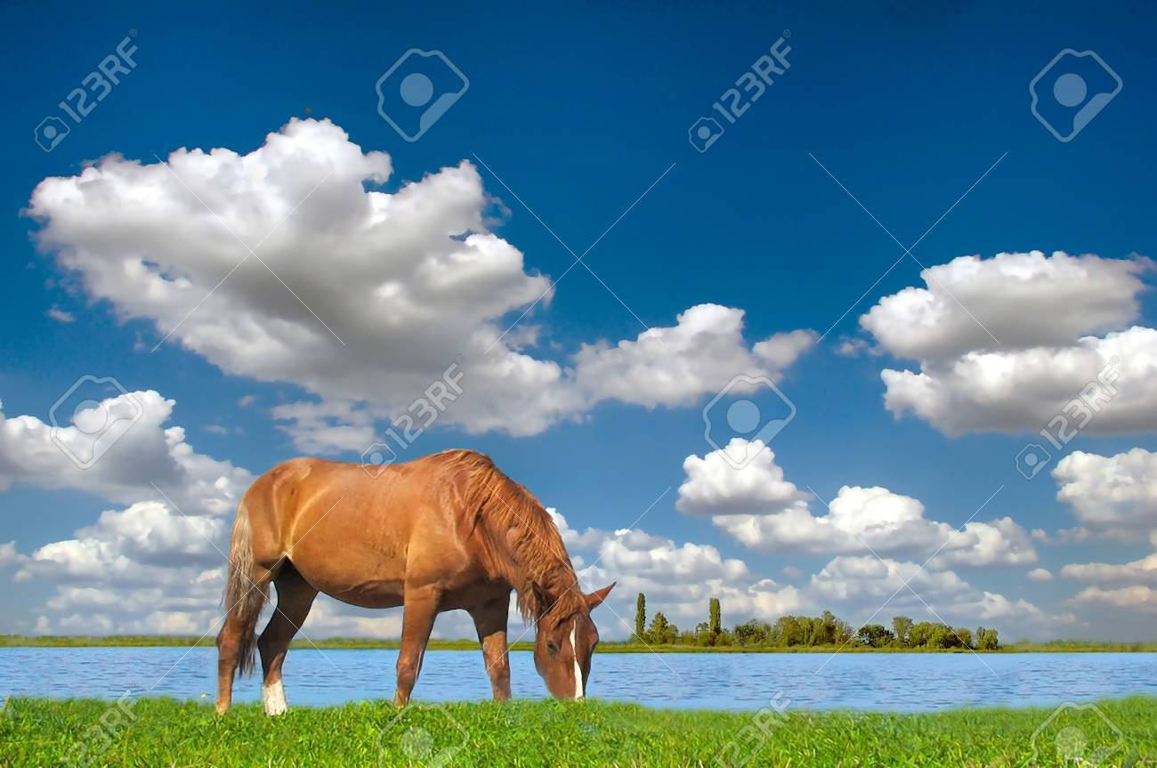 Horse in the meadow, summer, blue sky Stock Photo - 10290139