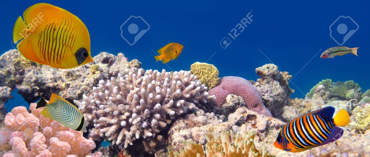 Underwater panorama with Masked Butterfly Fish. Red Sea, Egypt Stock Photo - 10397926