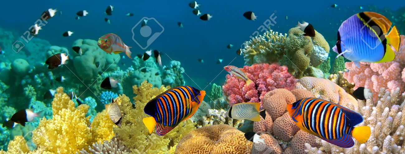 Underwater panorama with Angel fish, coral reef and fishes. Red Sea, Egypt Stock Photo - 10397929