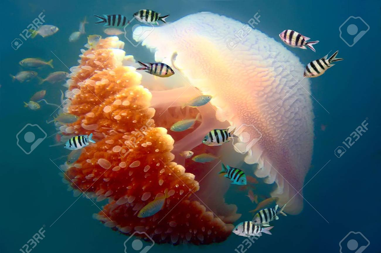 peaceful image of a mosaic jellyfish stock photo picture and