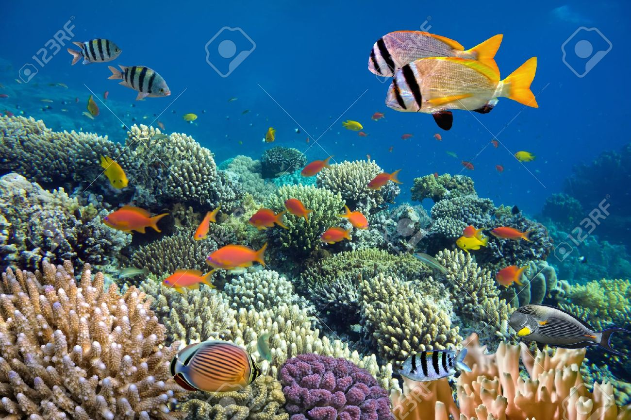 Underwater shoot of vivid coral reef with a fishes Stock Photo - 14588192