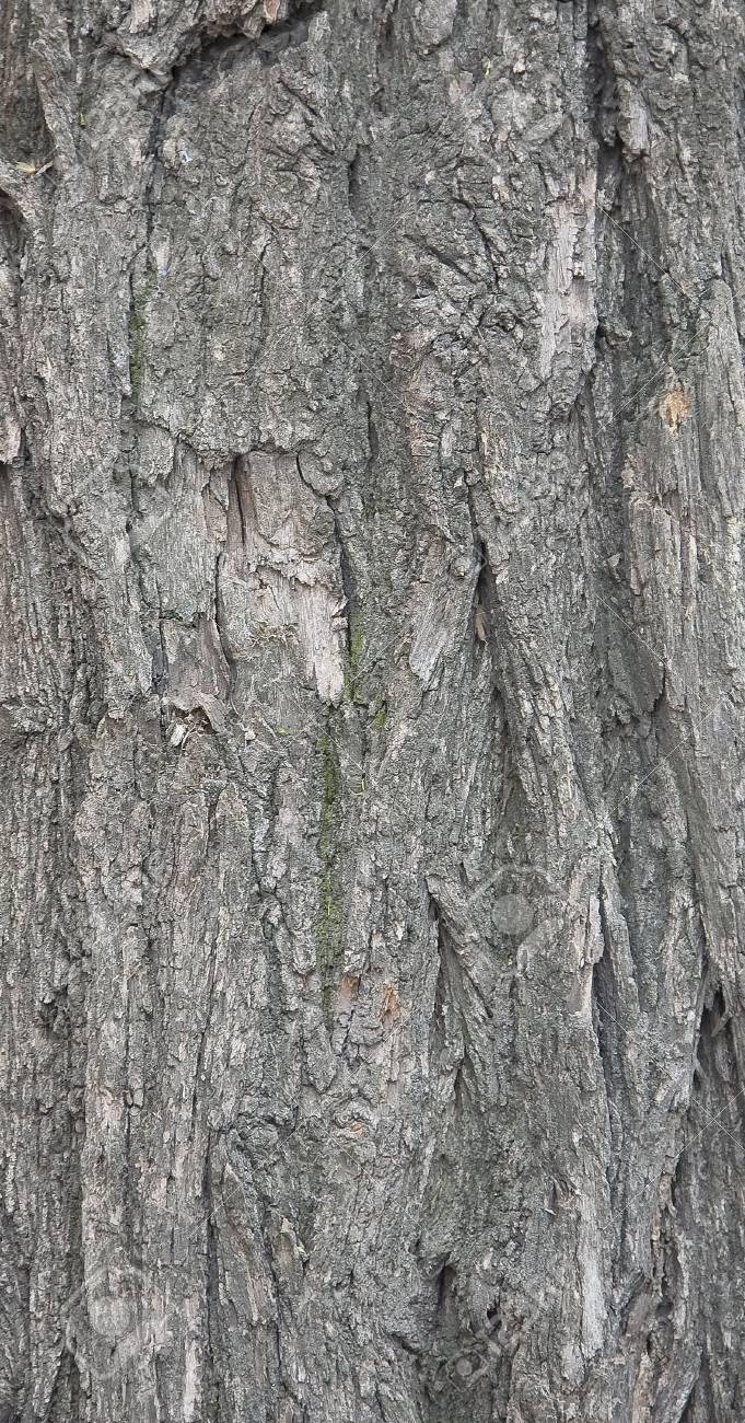 Bark of wood. Close-up. Stock Photo - 3114341