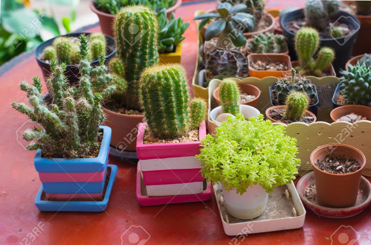 Cactus sur le bureau dans le jardin orientation sélective banque