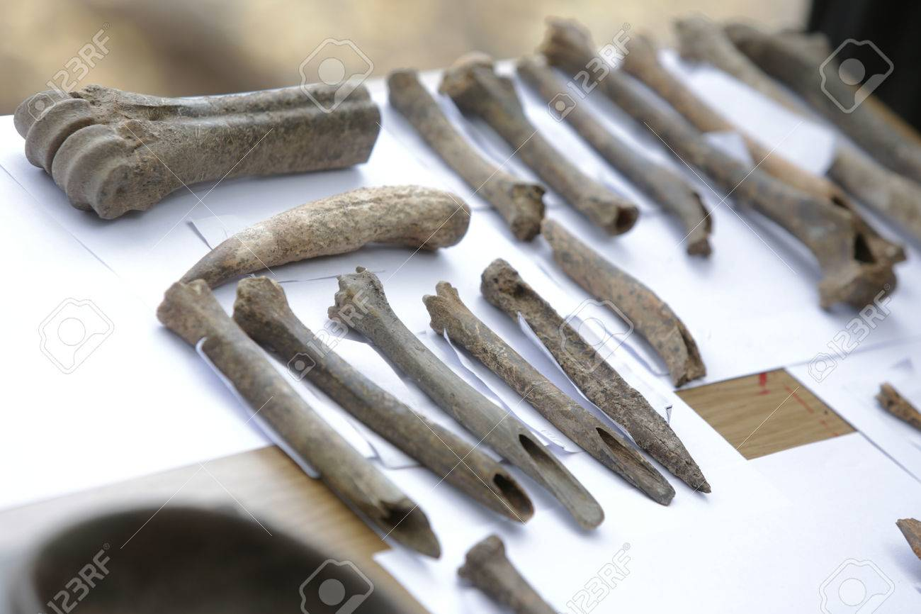 Huesos Humanos Se Muestran En Una Tabla De Excavions Arqueológicos ...