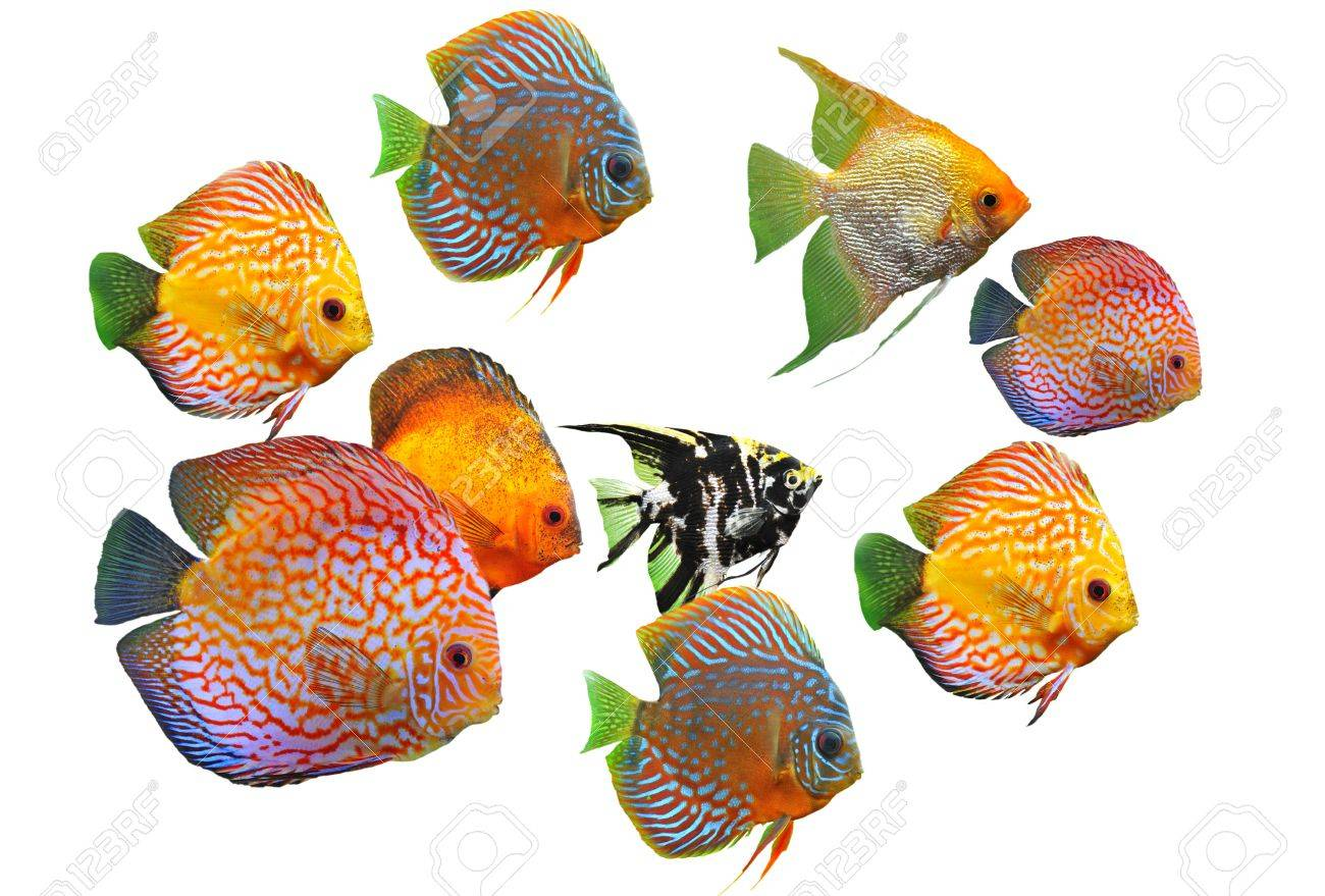 group of fishes on a white background Stock Photo - 7307566