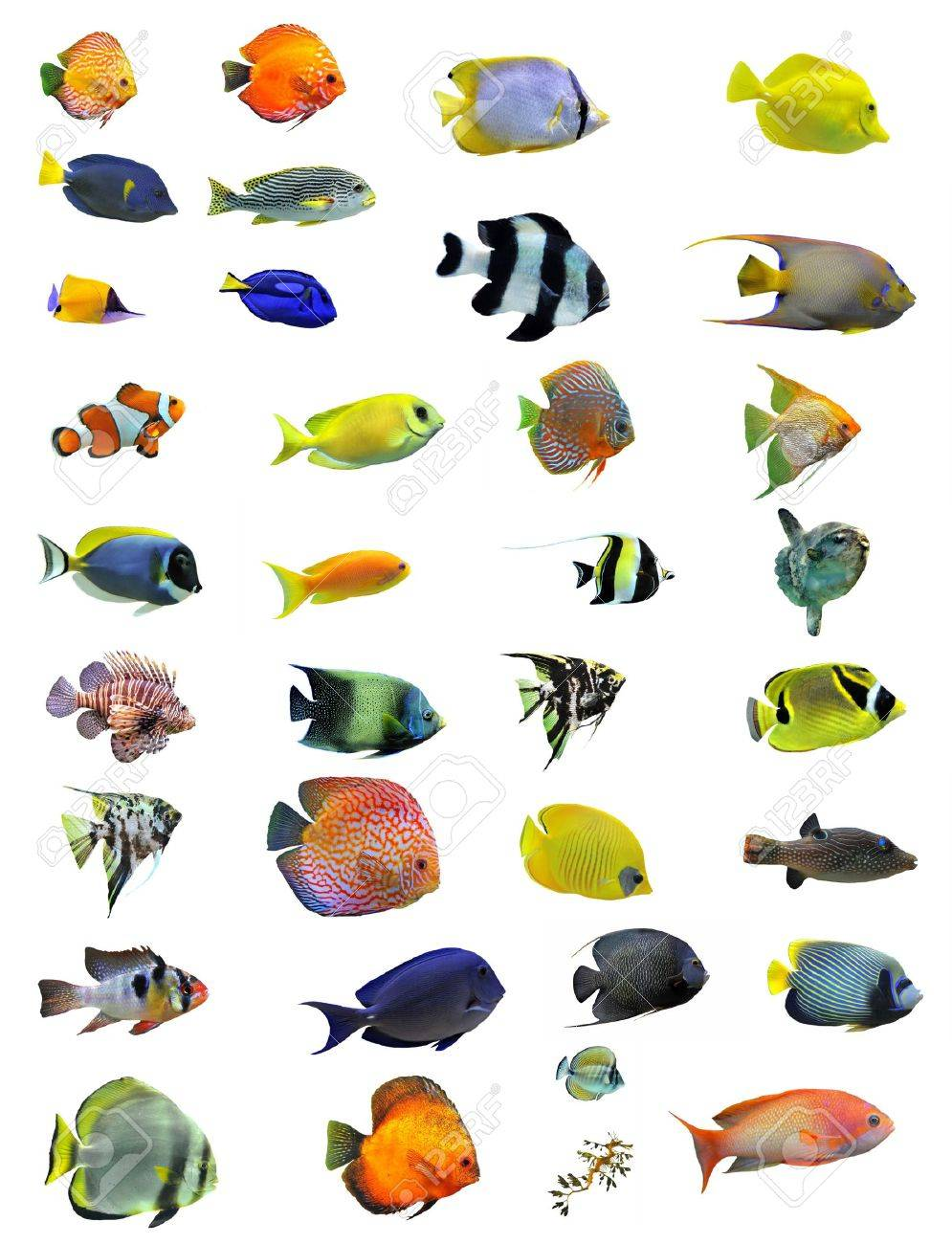 group of fishes on a white background Stock Photo - 9134139