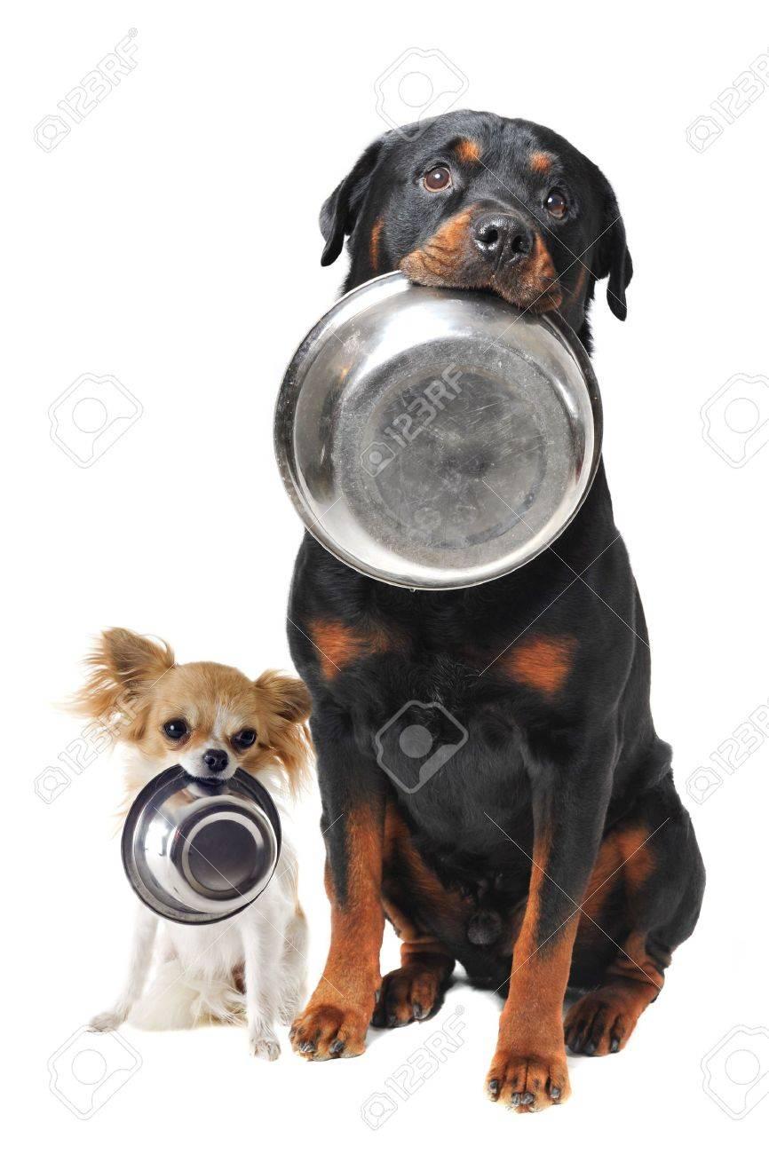 """Résultat de recherche d'images pour """"images animées d'un chien qui a faim"""""""