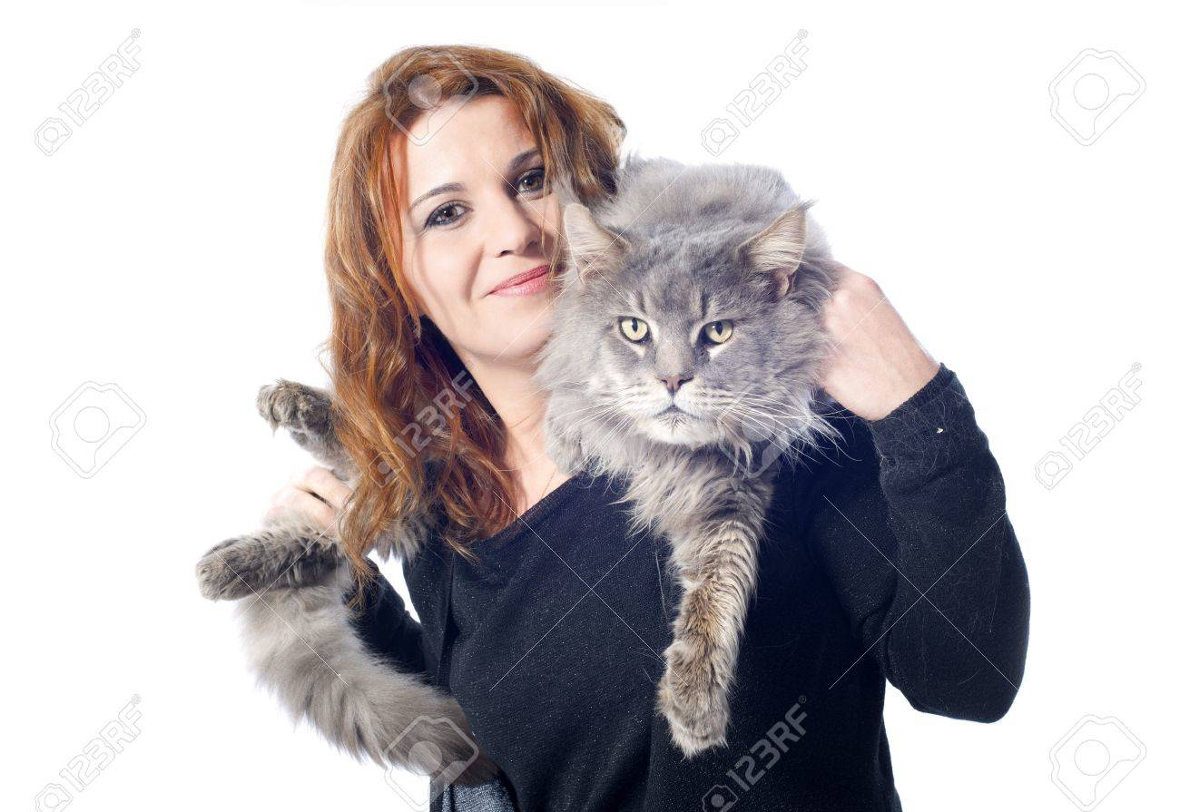 portrait of a purebred  maine coon cat and woman on a white background Stock Photo - 16883326