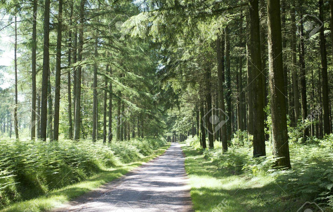 picture of a road in a forest in the Limousin Stock Photo - 20923318