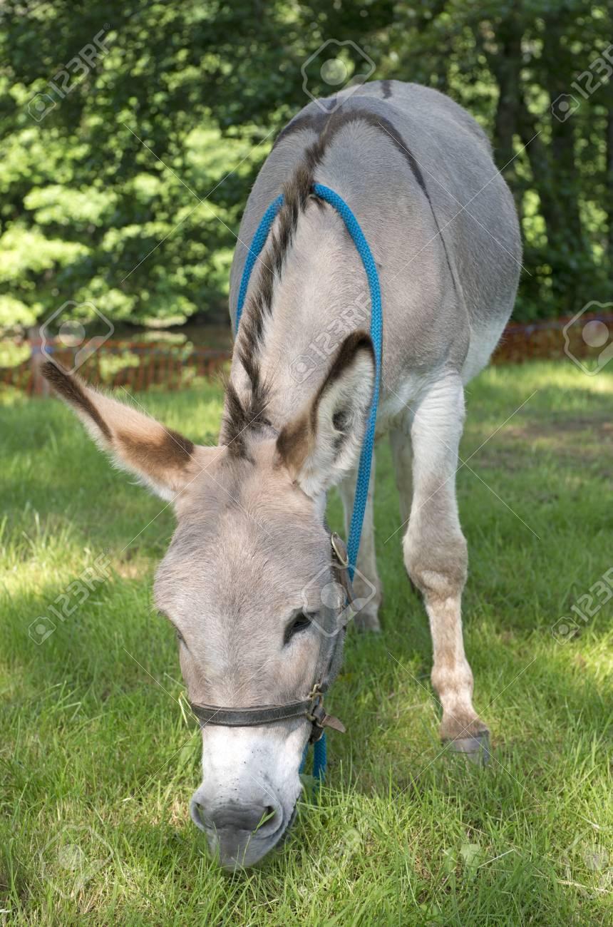 Provence donkey Stock Photo - 20923323
