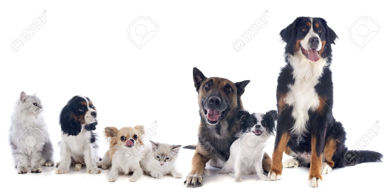 seven dogs and cat in front of white background Stock Photo - 21439543