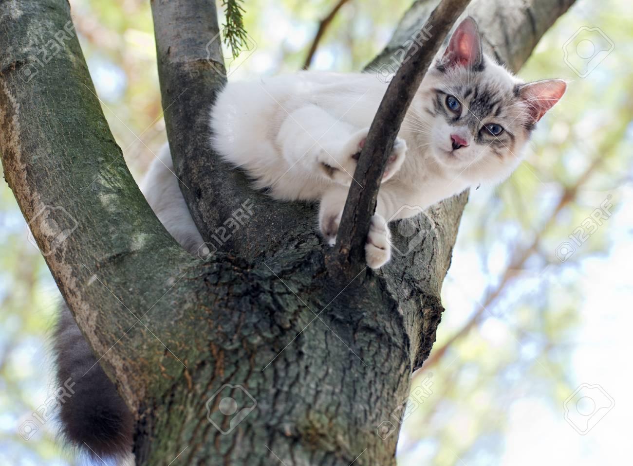birman kitten is perching on a trunk Stock Photo - 22059849