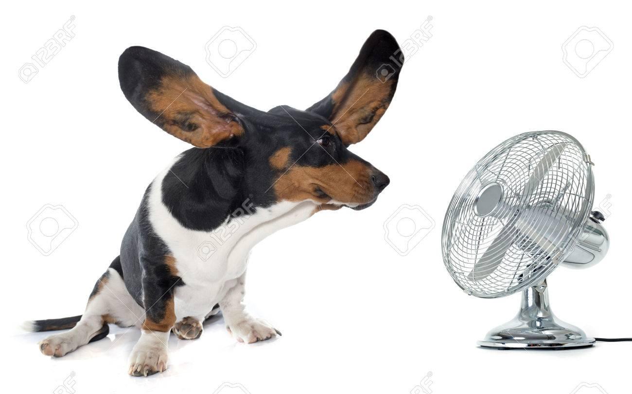 Пятничная жаррра:(