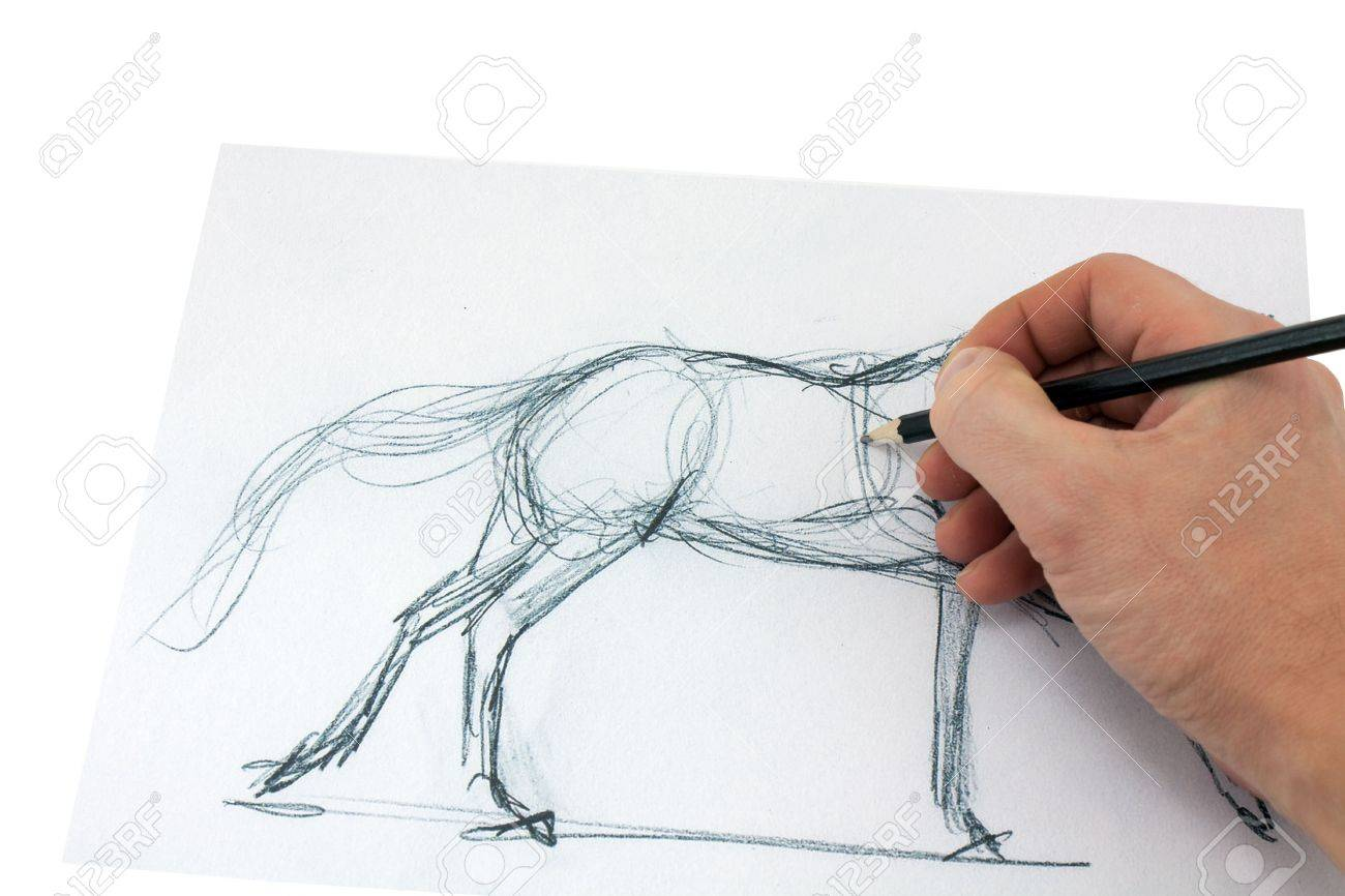 Drawing Pencil Artist Makes A Sketch Of A Horse Stock Photo Picture And Royalty Free Image Image 6007237