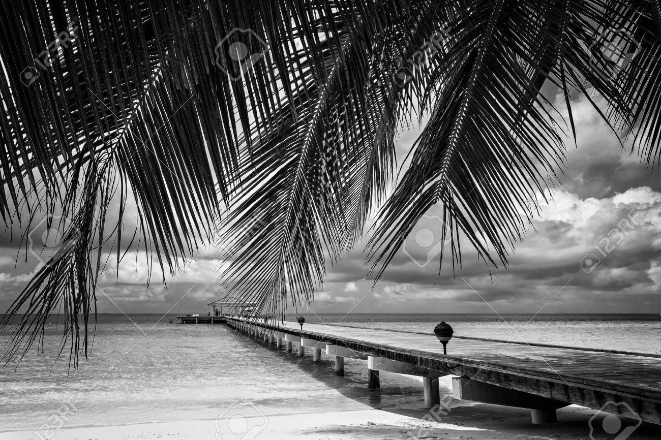 Paisaje Blanco Y Negro Islas Exóticas Maldivas Fotos Retratos