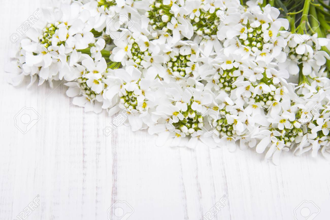 White flowers frame on white wooden background stock photo picture stock photo white flowers frame on white wooden background mightylinksfo