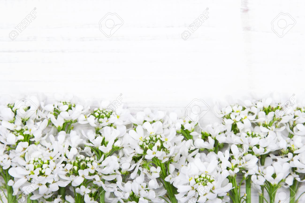 White Flowers Frame On White Wooden Background Stock Photo Picture