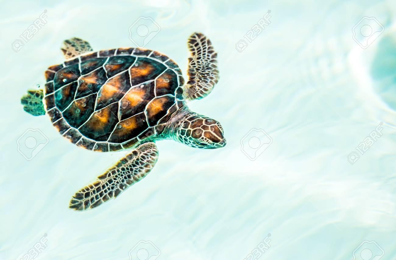 Groß Schildkröte Innere Anatomie Bilder - Menschliche Anatomie ...