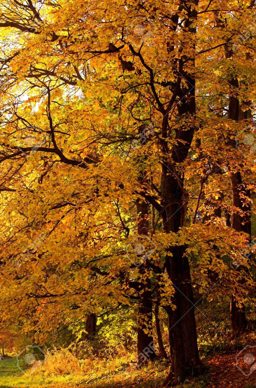 Autumn tree Stock Photo - 508589