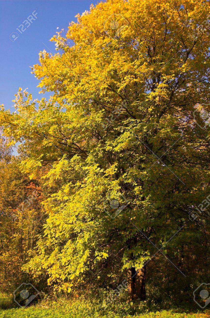 Autumn yellow woodland, Russia Stock Photo - 566431
