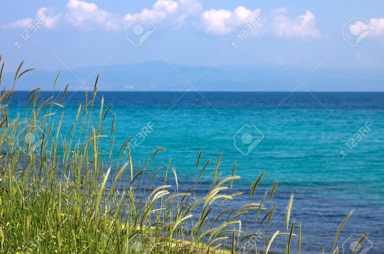 Grass, sea ans blue sky, Landscape Stock Photo - 773145