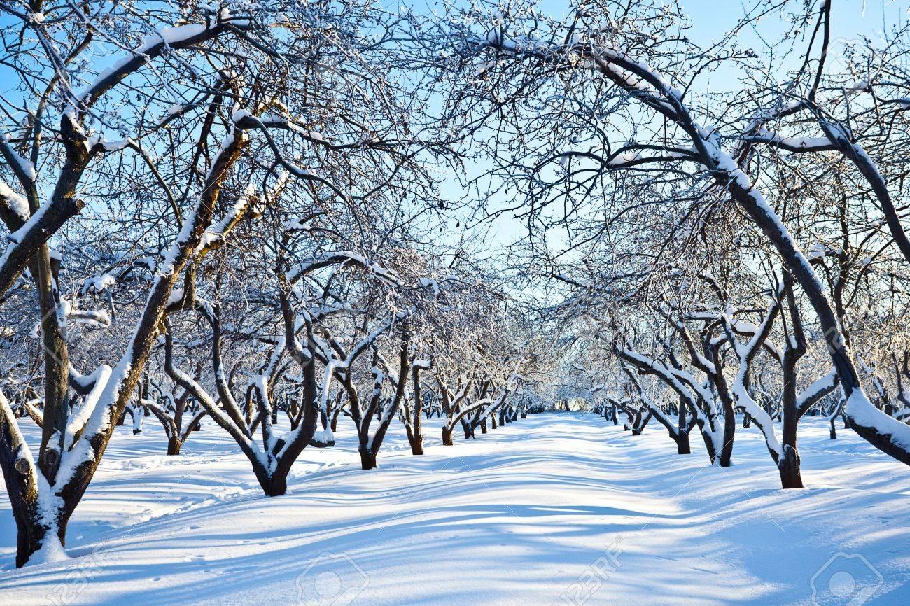 ski track in winter snowy apple trees garden stock photo picture