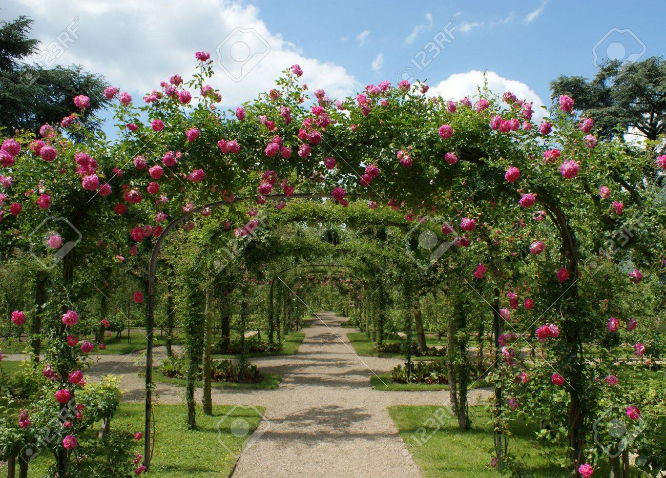 Roses Pergola In A French Garden Stock Photo Picture And Royalty
