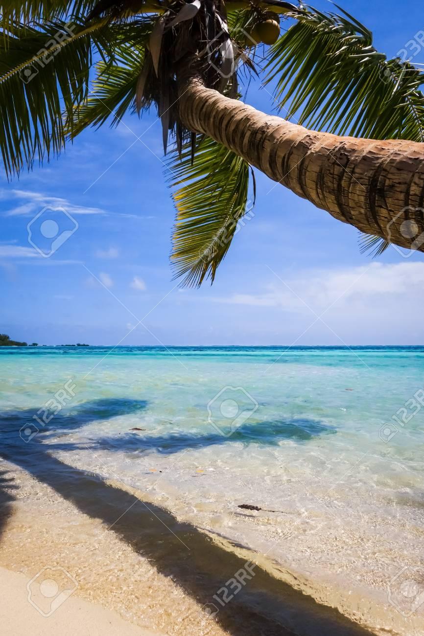 Paradise Tropical Beach And Lagoon In Moorea Island French Polynesia