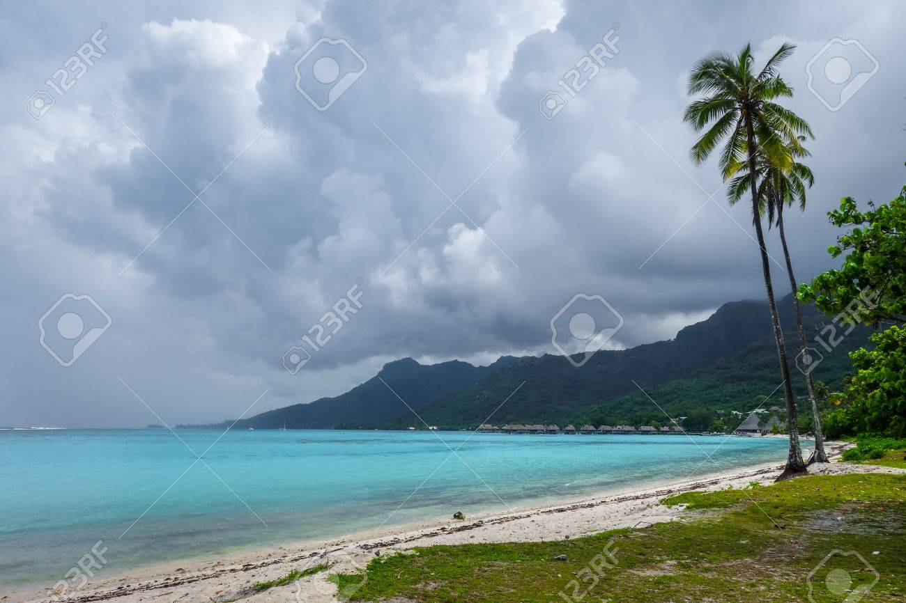 Palm Trees On Temae Beach In Moorea Island French Polynesia