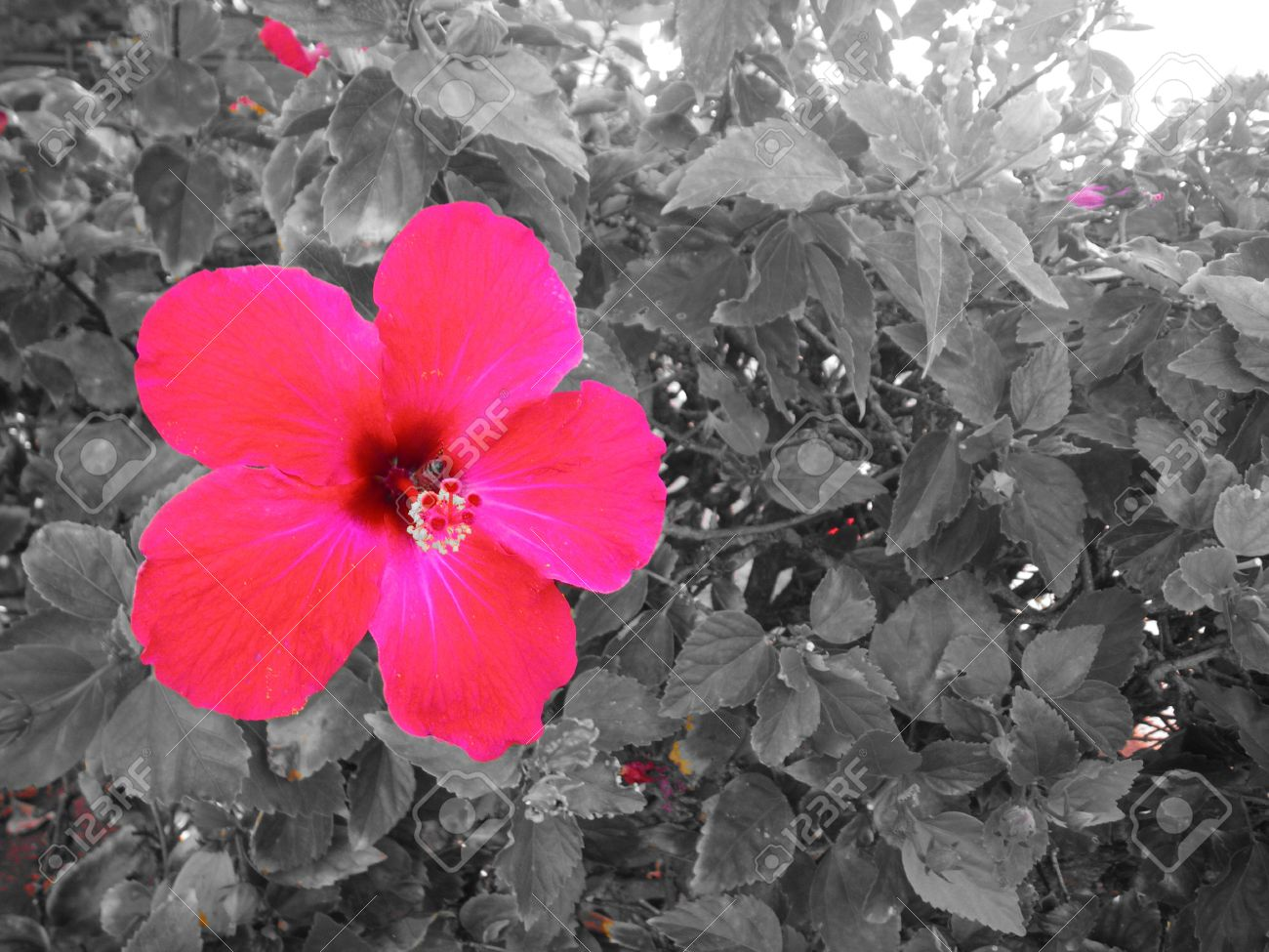 Black And White Photography Flowers With Color Accents Lektonfo