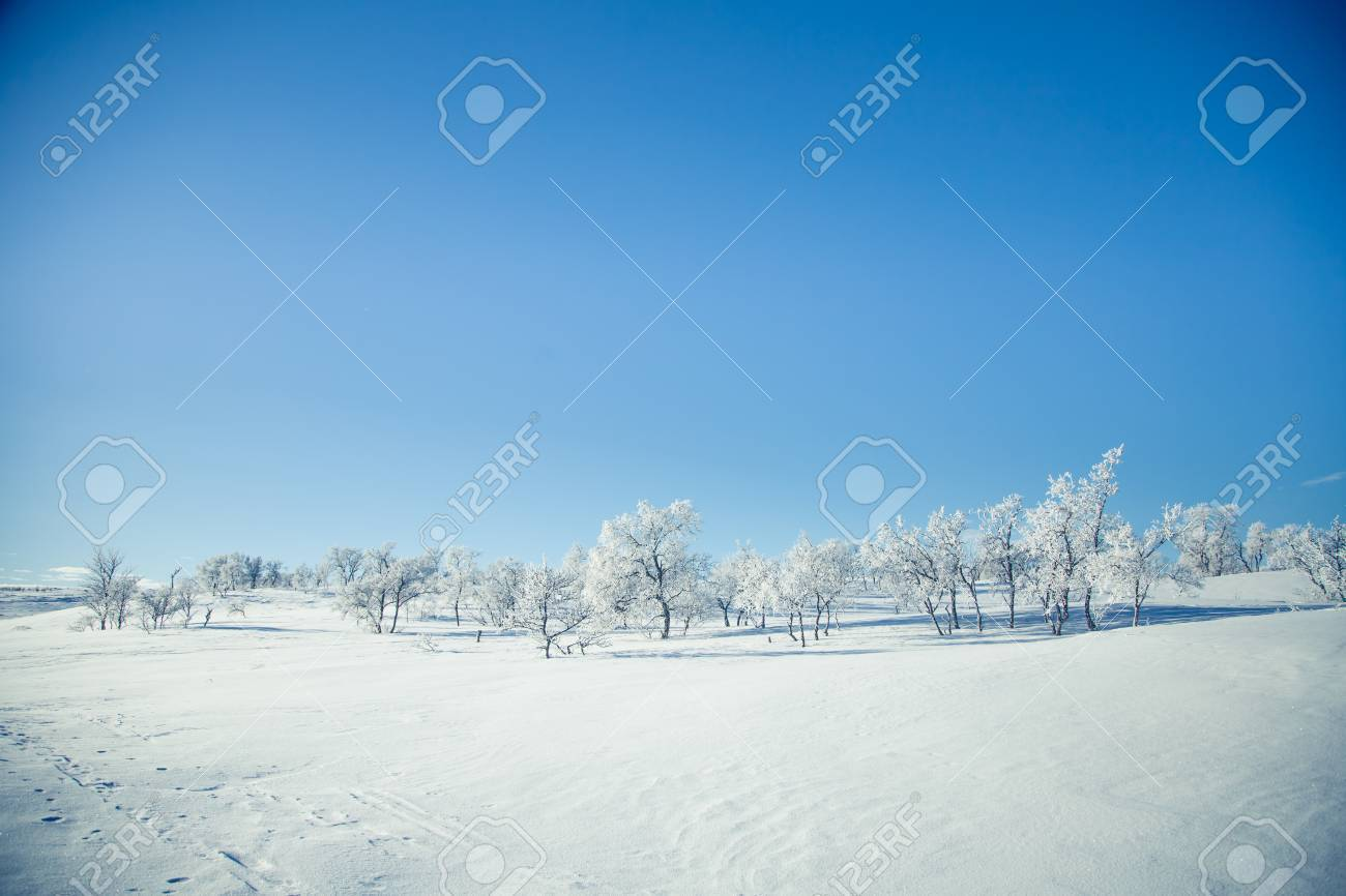 A beautiful landscape of a frozen plains in a snowy Norwegian winter day - 81182133