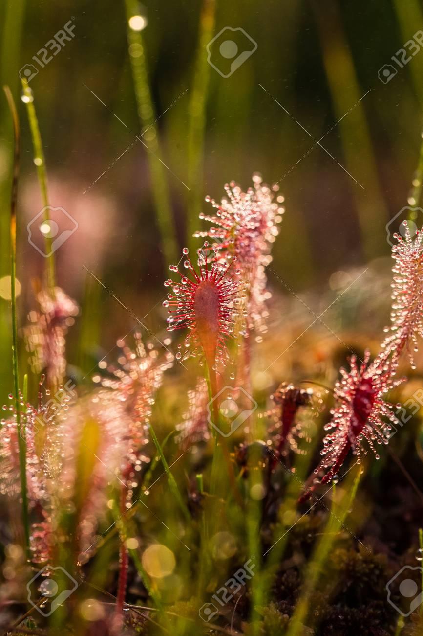 plante carnivore soleil