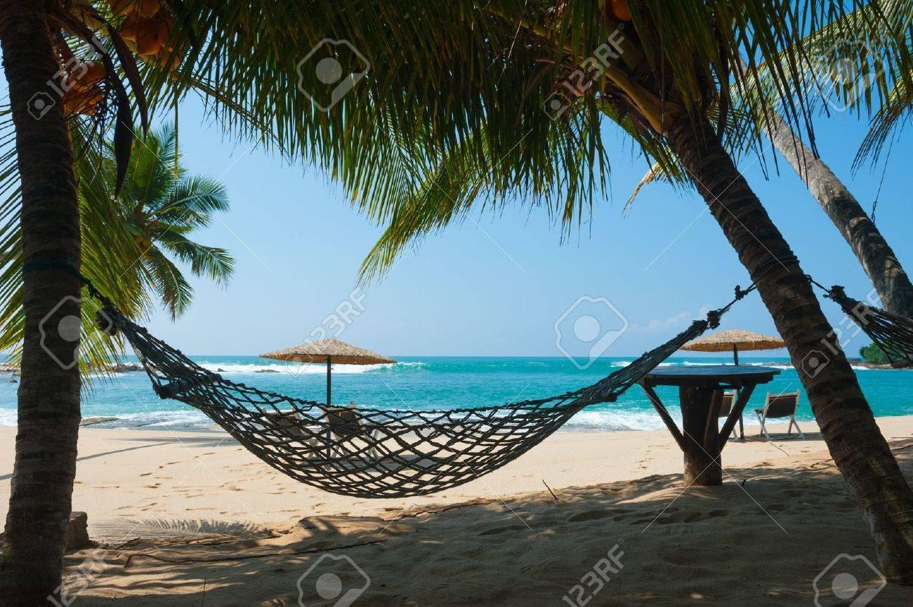 Hammock between palm trees on a tropical beach in Sri Lanka - 13666392