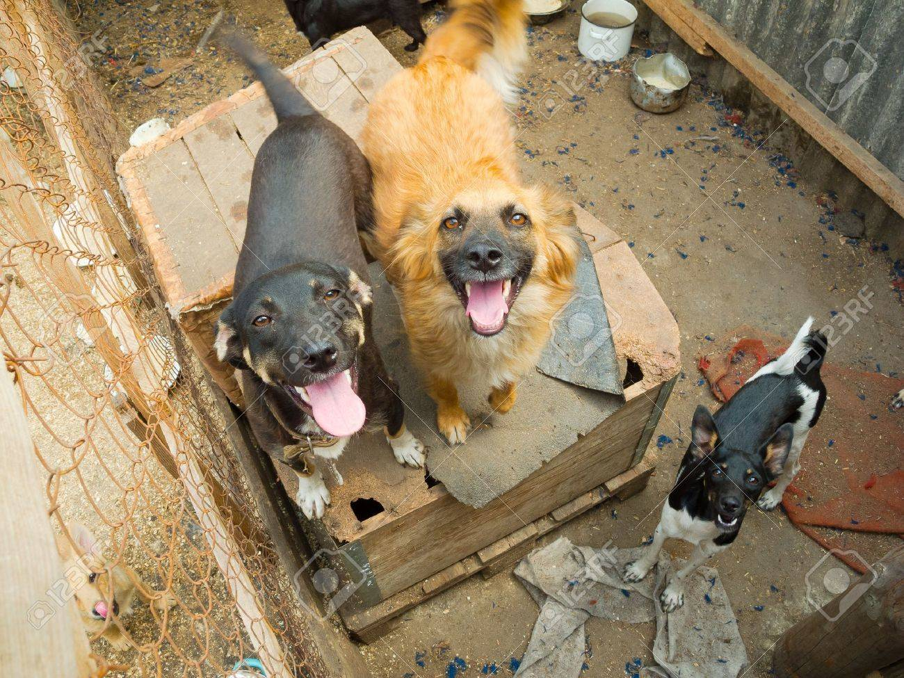 Stray dogs in the shelter - 14241998