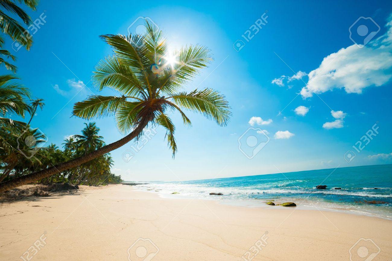Untouched tropical beach in Sri Lanka - 14747662