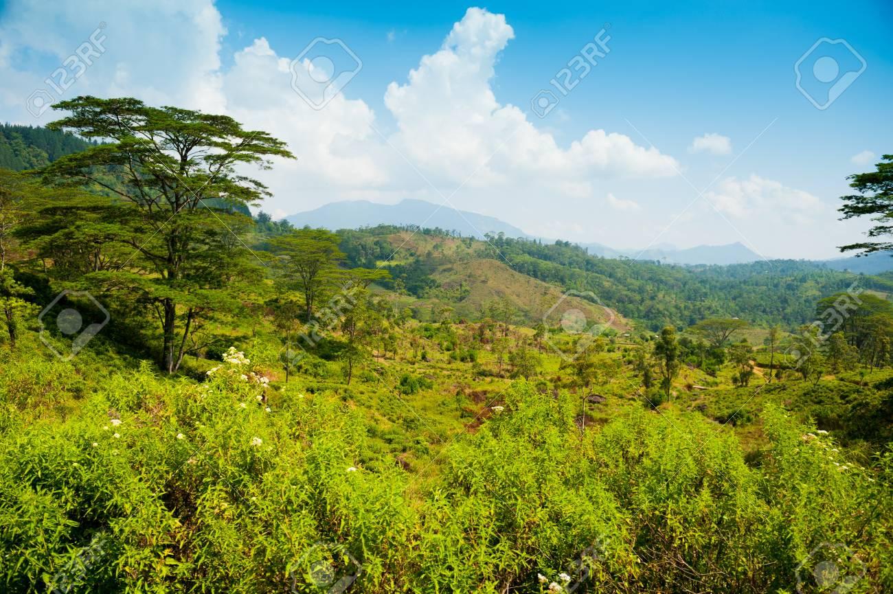 Tea plantation landscape in Sri Lanka Stock Photo - 14920613