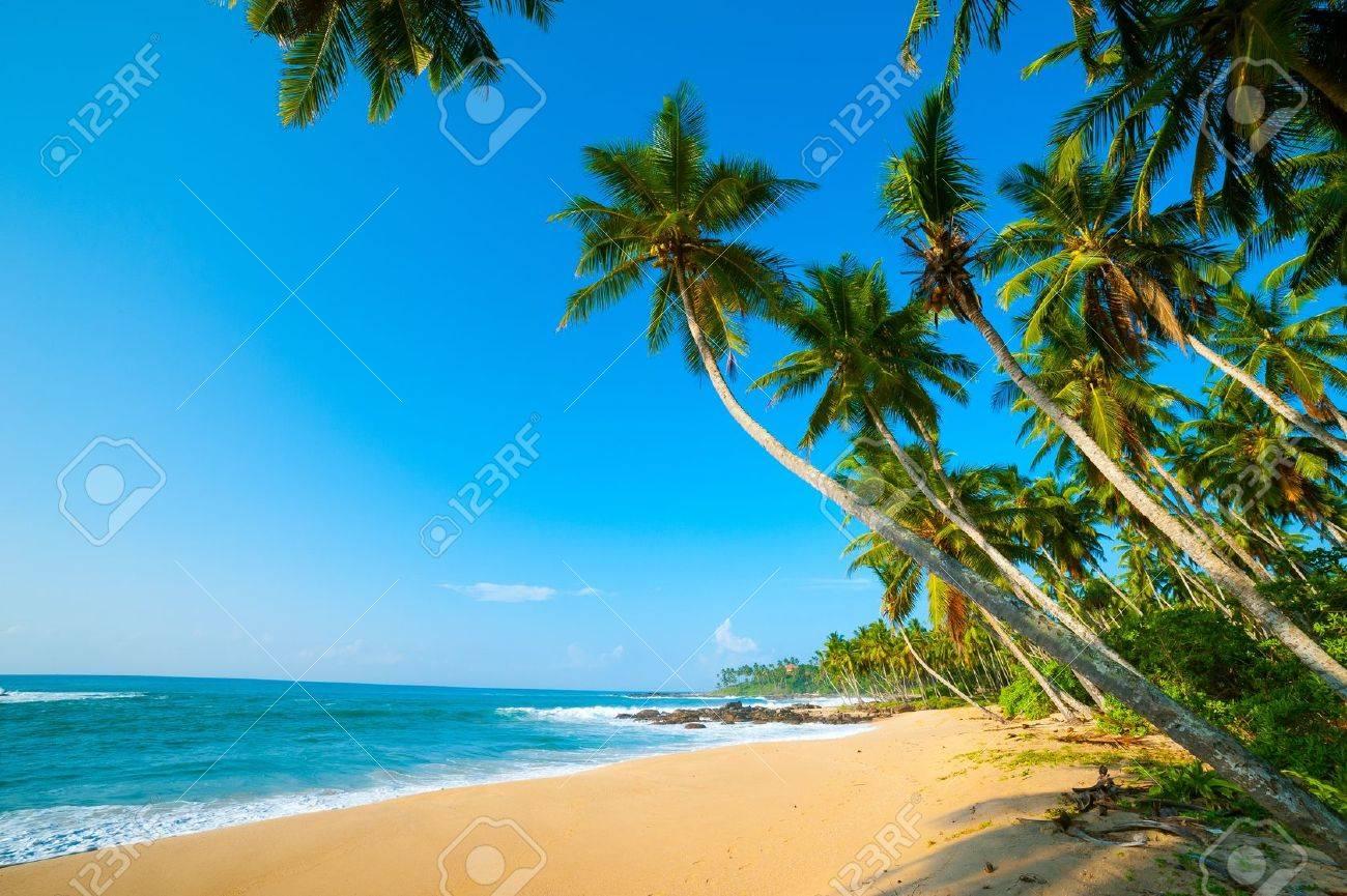 Untouched tropical beach in Sri Lanka - 15053670