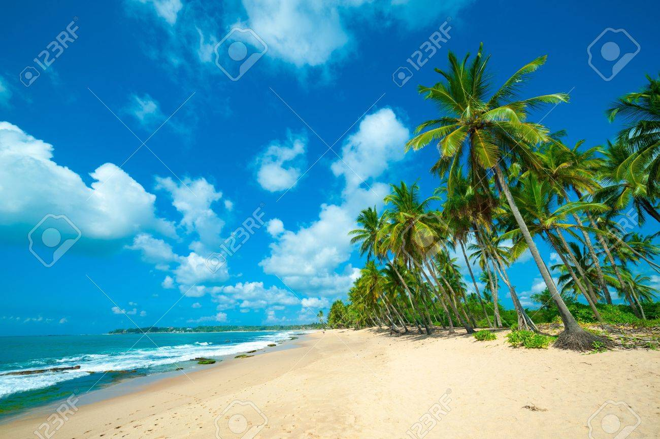 Untouched tropical beach in Sri Lanka - 16645870
