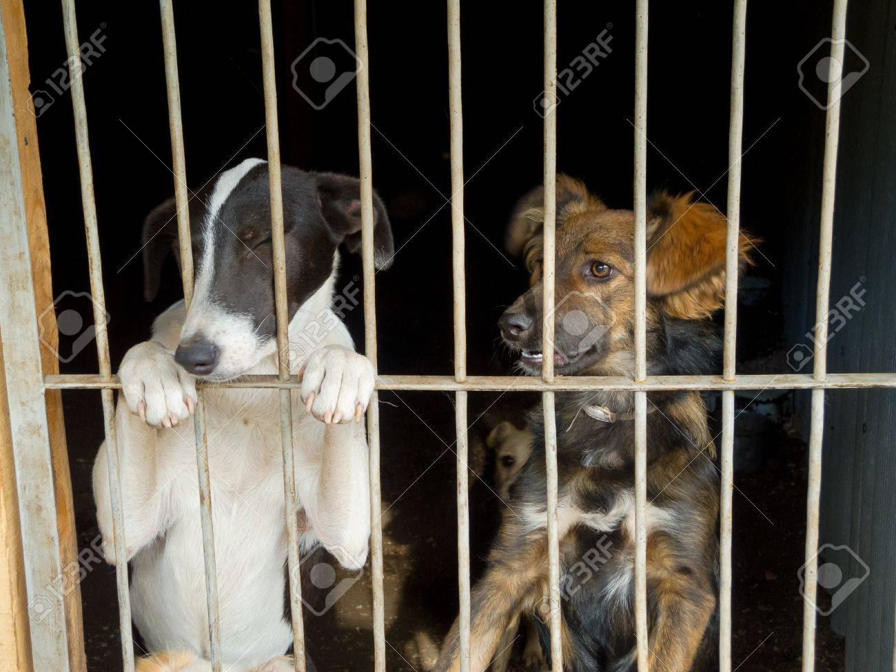 Stray dogs in the shelter - 21946914