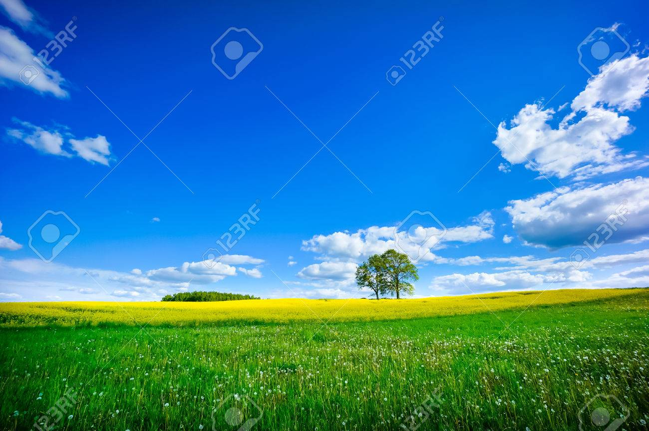 Beautiful summer landscape of meadows with trees. Lithuania - 42152805