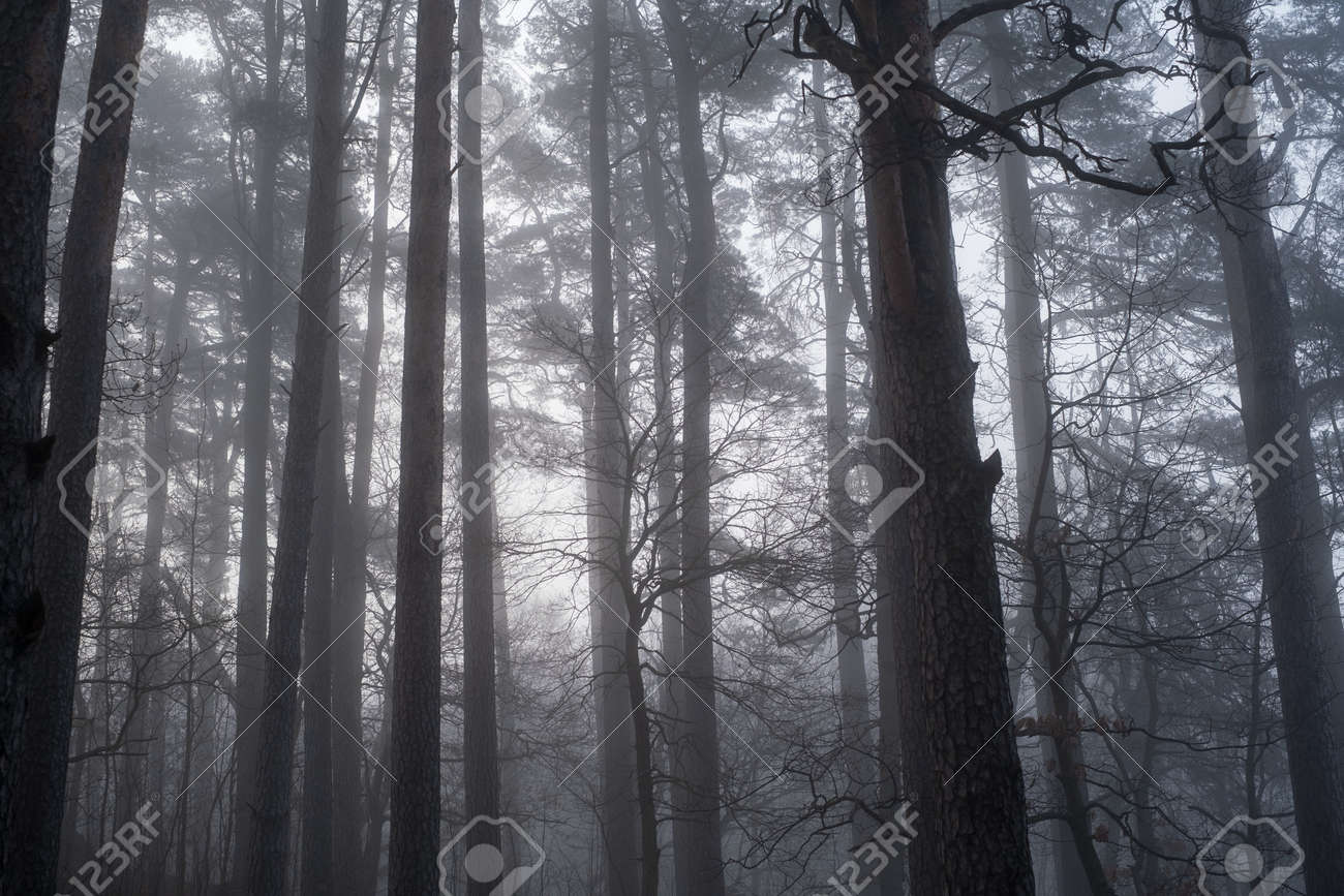 Trees growing in forest in foggy morning - 170229536